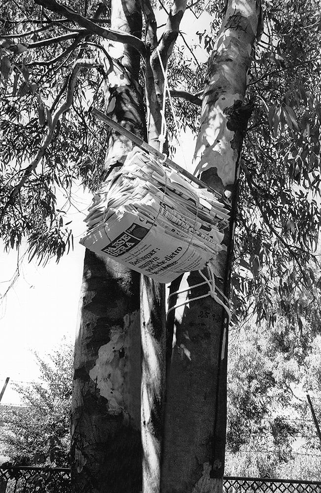 Fotografia di Gianfranco Baruchello che propone un mucchio di giornali appesi a un albero
