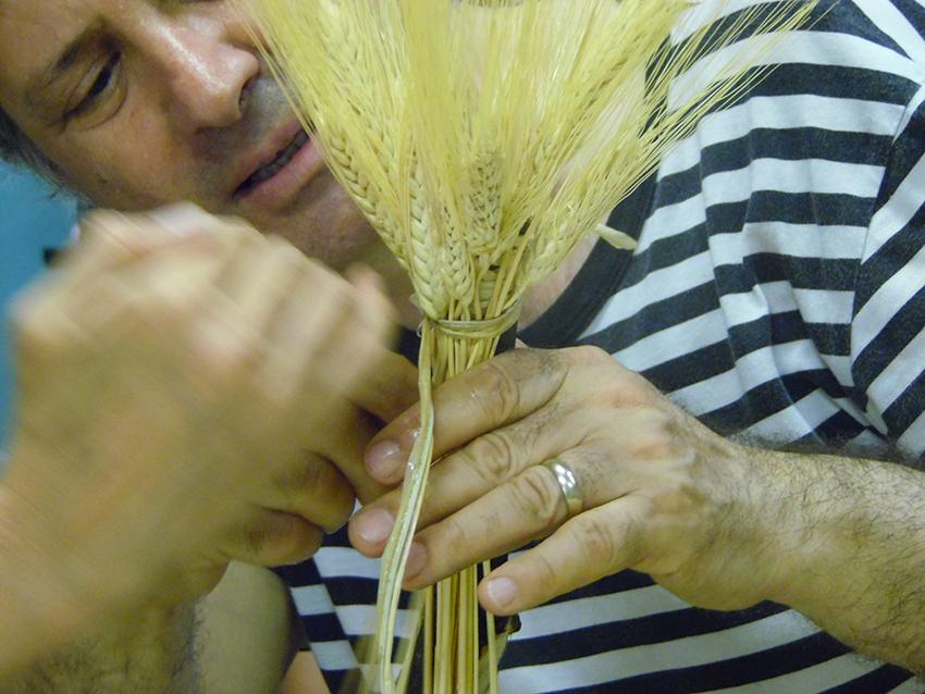 Workshop La Passione del grano, la raccolta