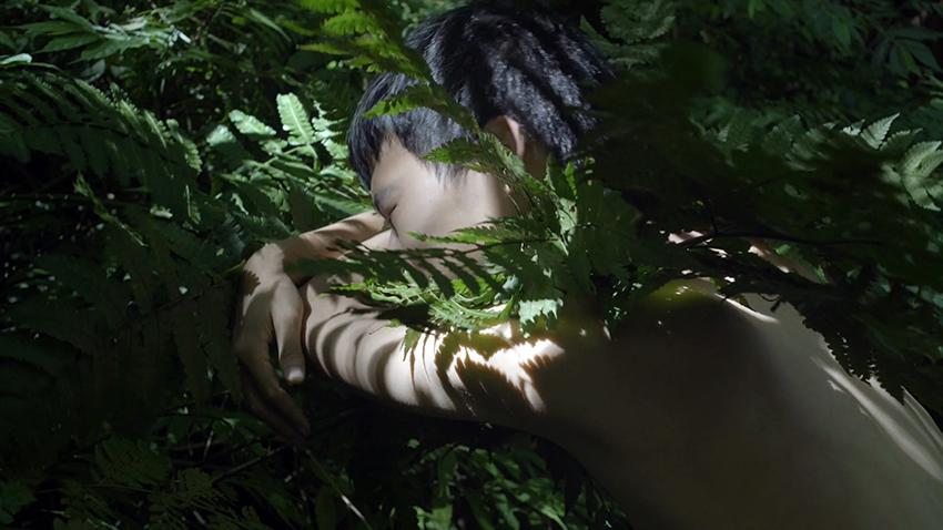 Zheng Bo, Pteridophilia 1