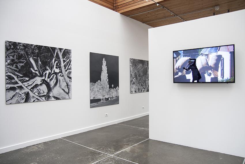 Prima che le Piante Avessero un Nome, exhibition view