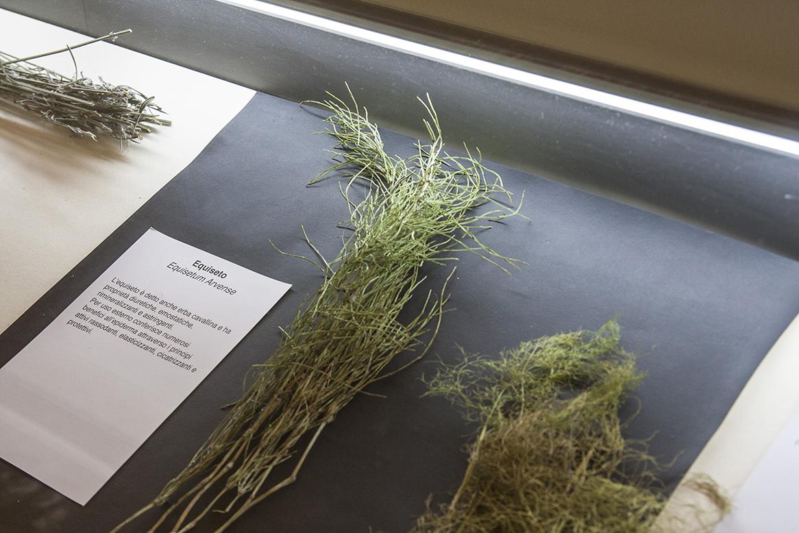 Libera Scuola del Giardino, piante